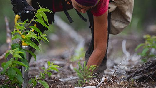 Webpuccino® plant bomen om een positieve bijdrage aan de wereld te leveren.